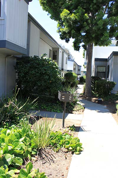 Concrete Pathway Between The Buildings With A Tree, Bushes And Landscaping, And A Small Barbeque Pit