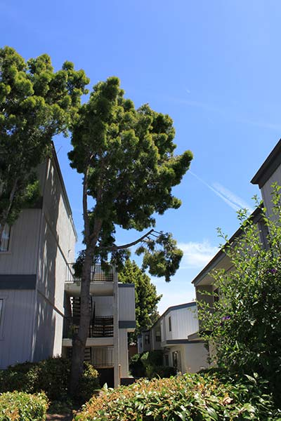 A View Of The Sky Between The 2 Story Buildings On A Sunny Day With Trees And Lots Of Plants.